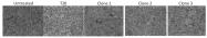 DDX1304A488-100 - HIV-1