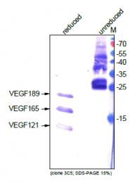 DM3520P - VEGF-A