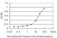 H00000060-M01 - Actin beta / ACTB