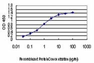 H00000091-M06 - Activin receptor type 1B / ACVR1B