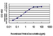 H00000091-M09 - Activin receptor type 1B / ACVR1B