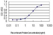 H00000208-M01 - AKT2 / PKB beta