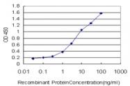 H00000249-M01 - Alkaline phosphatase / ALPL