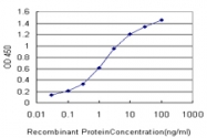 H00000673-M02 - B-Raf proto-oncogene