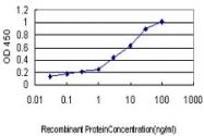 H00000710-M01 - SERPING1 / C1 Inhibitor