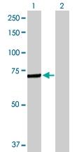 H00000722-D01P - C4b-binding protein alpha