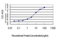 H00000891-M01 - Cyclin B1