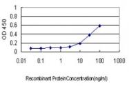 H00001200-M01 - Tripeptidyl-peptidase 1 (TPP1)