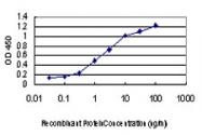 H00001649-M01 - GADD153 / CHOP