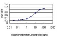 H00002263-M04 - CD332 / FGFR-2