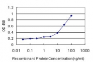 H00002529-M05 - Fucosyltransferase 7