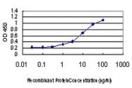 H00002664-M08 - Rab GDI alpha / GDI1