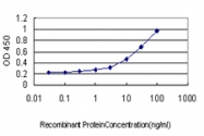 H00002752-M01 - Glutamine synthetase