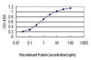 H00003035-M01 - Histidyl-tRNA synthetase / HARS