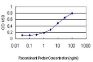H00003162-M01 - Heme oxygenase 1 / HMOX1