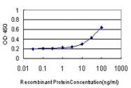 H00003553-M01 - Interleukin-1 beta / IL-1B