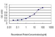 H00003791-M01 - CD309 / VEGFR-2 / Flk-1