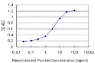 H00003791-M02 - CD309 / VEGFR-2 / Flk-1