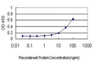 H00003836-M01 - KPNA1 / Importin alpha-1