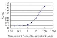 H00003915-M03 - Laminin gamma 1