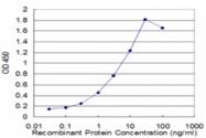 H00003920-M01 - CD107b / LAMP2