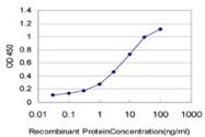 H00005534-M01 - PPP3R1 / Calcineurin B