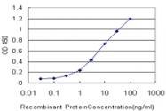 H00005653-M01 - KLK6 / Kallikrein-6