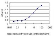 H00006184-M01 - Ribophorin-1 / RPN1