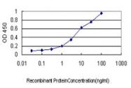 H00006376-M01 - Fractalkine / CX3CL1