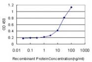 H00006696-M08 - Osteopontin / SPP1