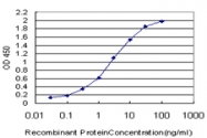 H00006722-M03 - Serum response factor (SRF)
