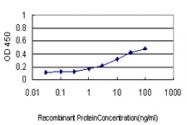 H00006855-M01 - Synaptophysin / SYP
