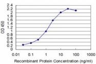 H00006862-M08 - T (Brachyury protein)