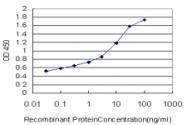 H00007148-M01 - Tenascin-X / TNXB