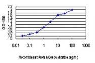 H00007706-M01 - TRIM25 / RNF147