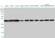 H00008464-M01A - SUPT3H / SPT3