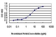 H00008814-M01 - CDKL1