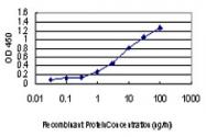 H00008814-M06 - CDKL1