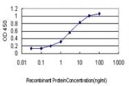H00008833-M01 - GMP synthetase / GMPS