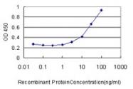 H00008905-M01 - AP1 complex subunit sigma-2 / AP1S2