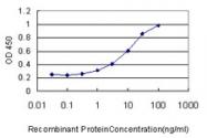 H00009961-M01 - Major Vault Protein