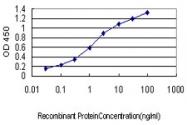 H00010000-M07 - AKT3 / PKB gamma