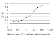 H00011199-M01 - Annexin A10 / ANXA10