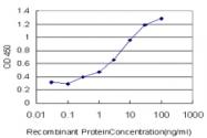 H00011199-M02 - Annexin A10 / ANXA10