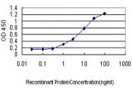 H00011202-M01 - KLK8 / Kallikrein-8