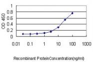H00022948-M01 - CCT5 / TCP1 epsilon