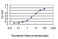 H00023308-M04 - CD275 / ICOS Ligand