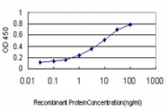 H00027175-M01 - TUBG2 / Tubulin gamma 2