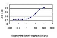 H00029934-M01 - Sorting nexin-12 (SNX12)