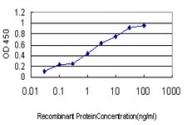 H00050808-M01 - Adenylate kinase 3 (AK3)